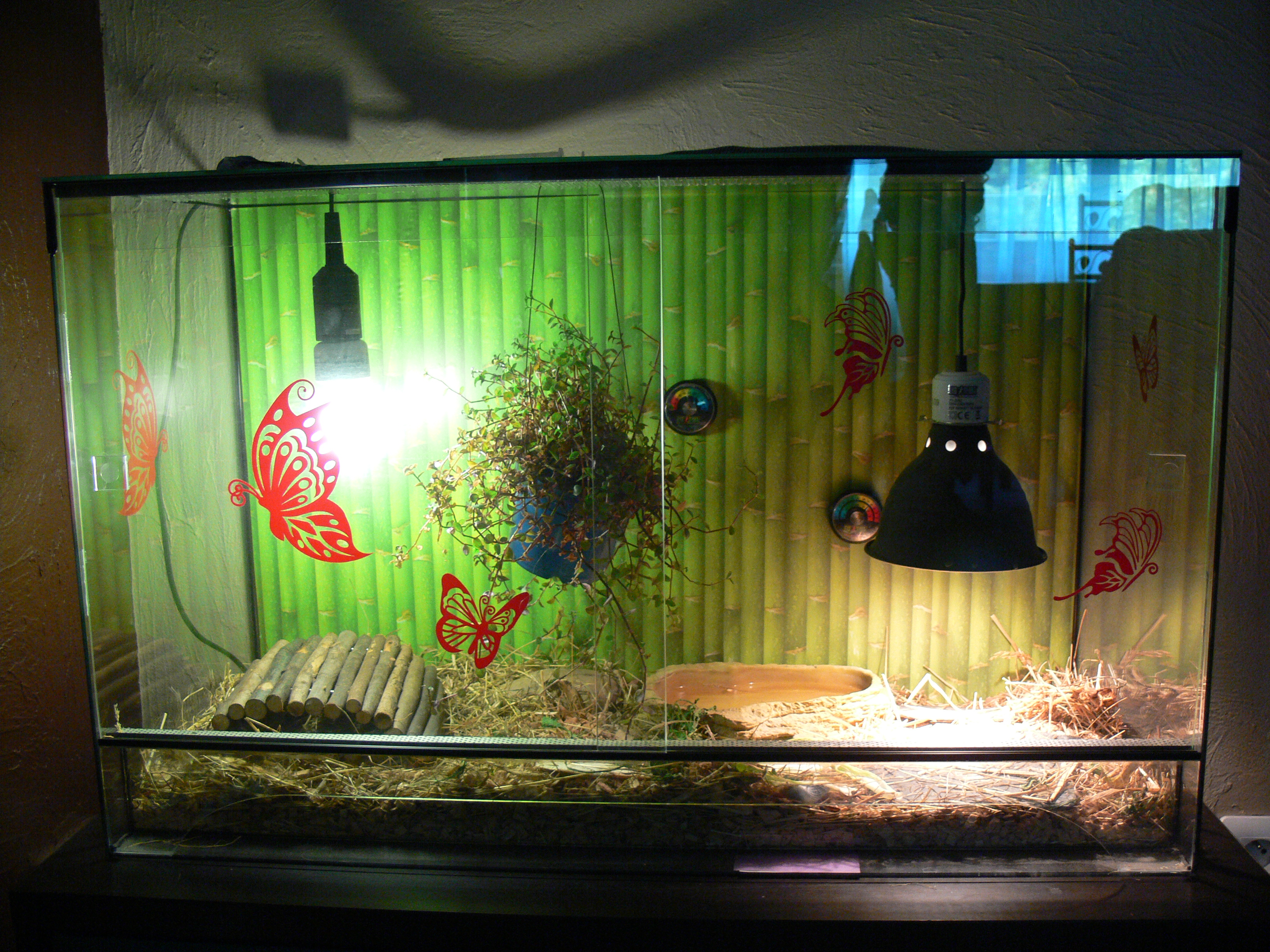 comment amenager un terrarium pour tortue